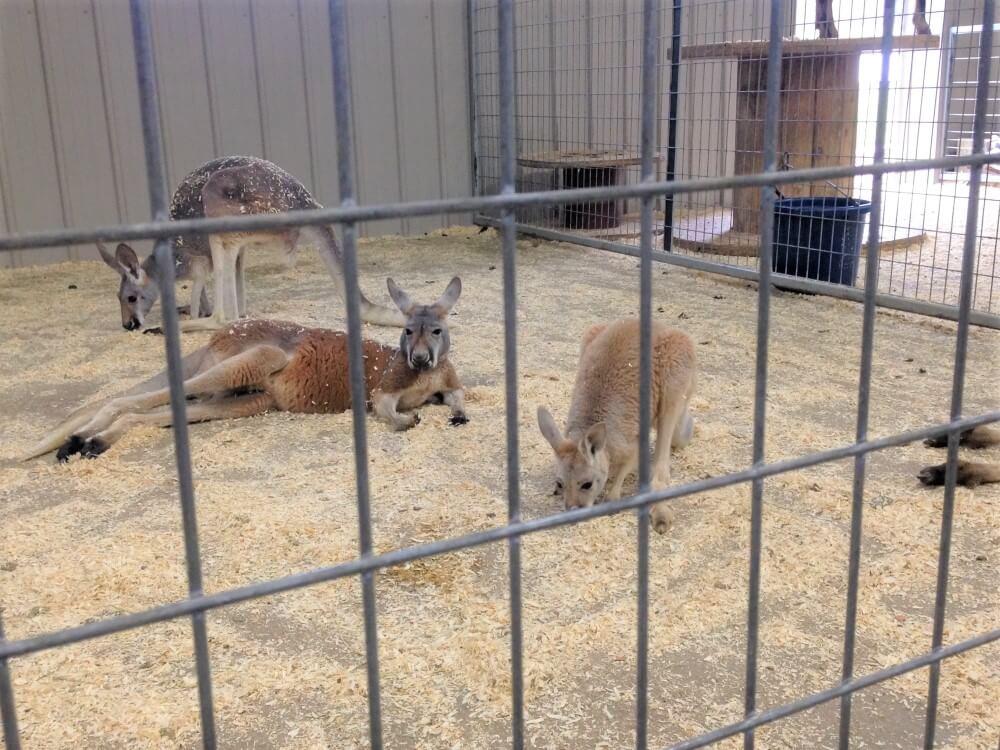 roadside zoos