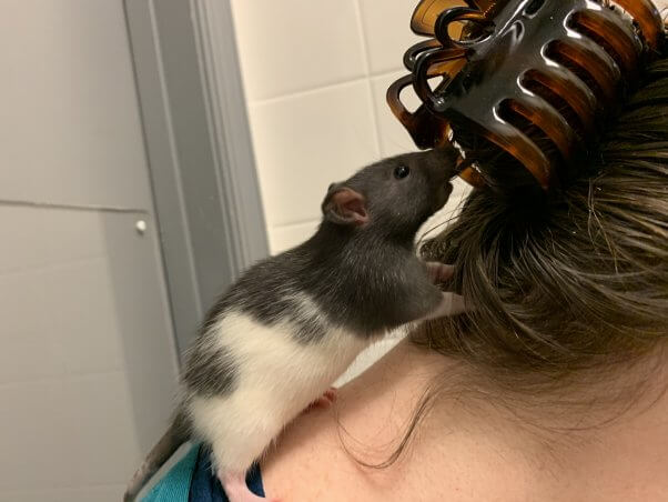 these rescued rat sisters are thriving in their new home