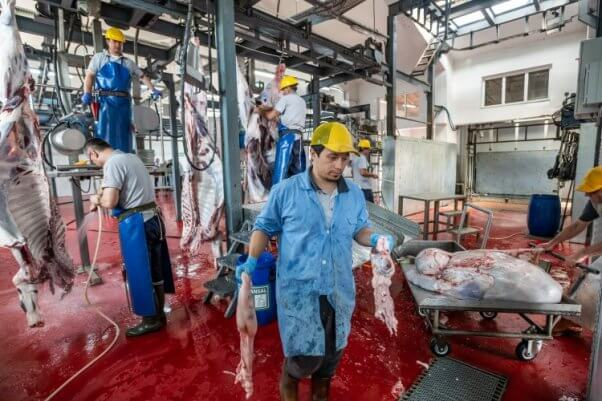Sad worker in slaughterhouse surrounded by bodies