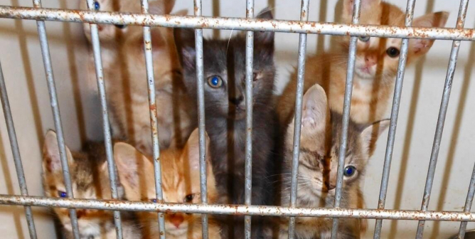Dogs and Cats Starved and Abused at 'Rescues'—Why Does This Keep Happening?