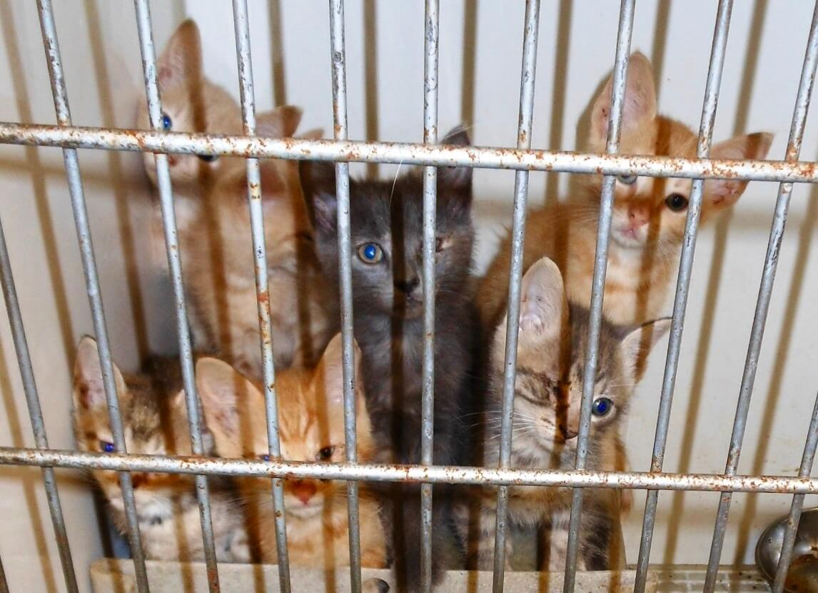 Kittens in a cage, animal rescue