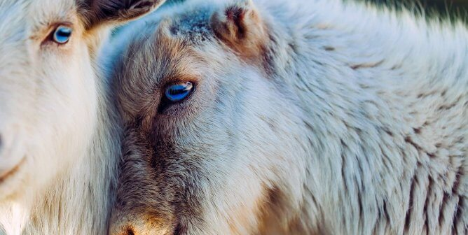 Urge J.Crew Group to Ban Wool and Cashmere