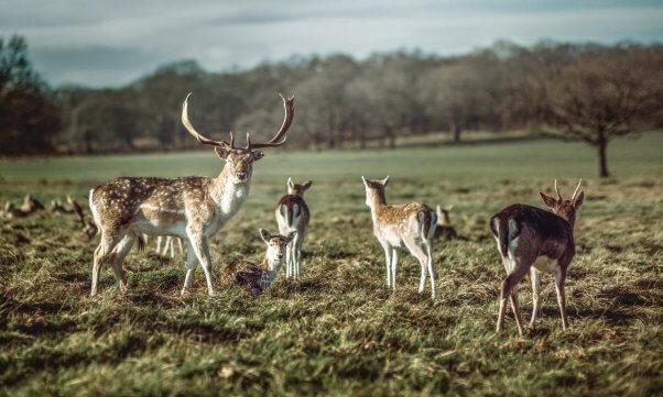 A herd of deer in a field