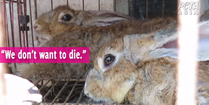 PETA Releases EXCLUSIVE Footage of Wet Markets in 6 Countries, Including China