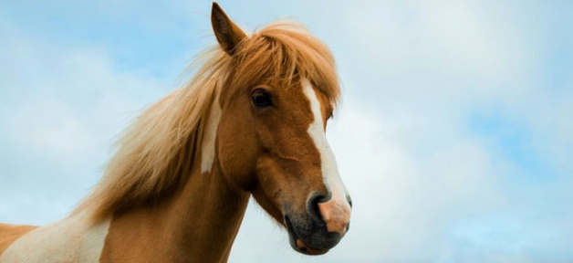 Brown and white horse with blue sky background