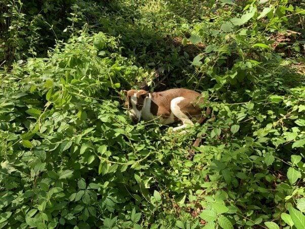 PETA fieldworkers help House, a suffering dog