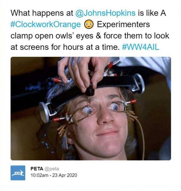 What happens at Johns Hopkins is like A Clockwork Orange