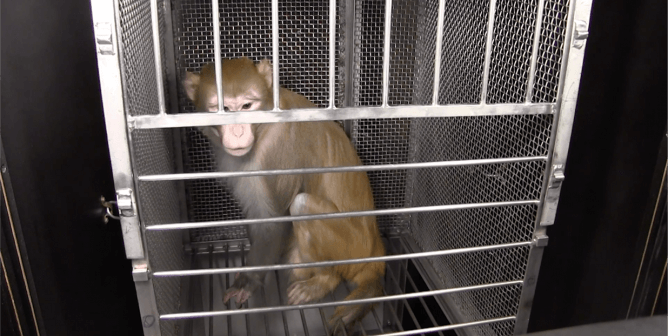 PETA Exposes Misery and Distress in NIMH's Animal Laboratories