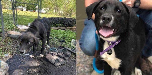 PETA fieldworkers help Reggie