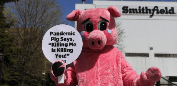 Pandemic pig at Smithfield slaughterhouse