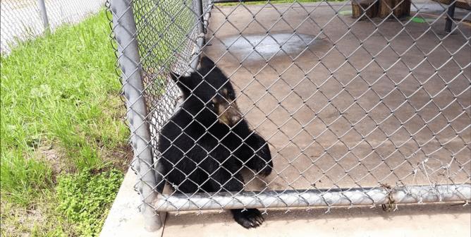 Michael Keaton Condemns Bear-Cub Photo Ops