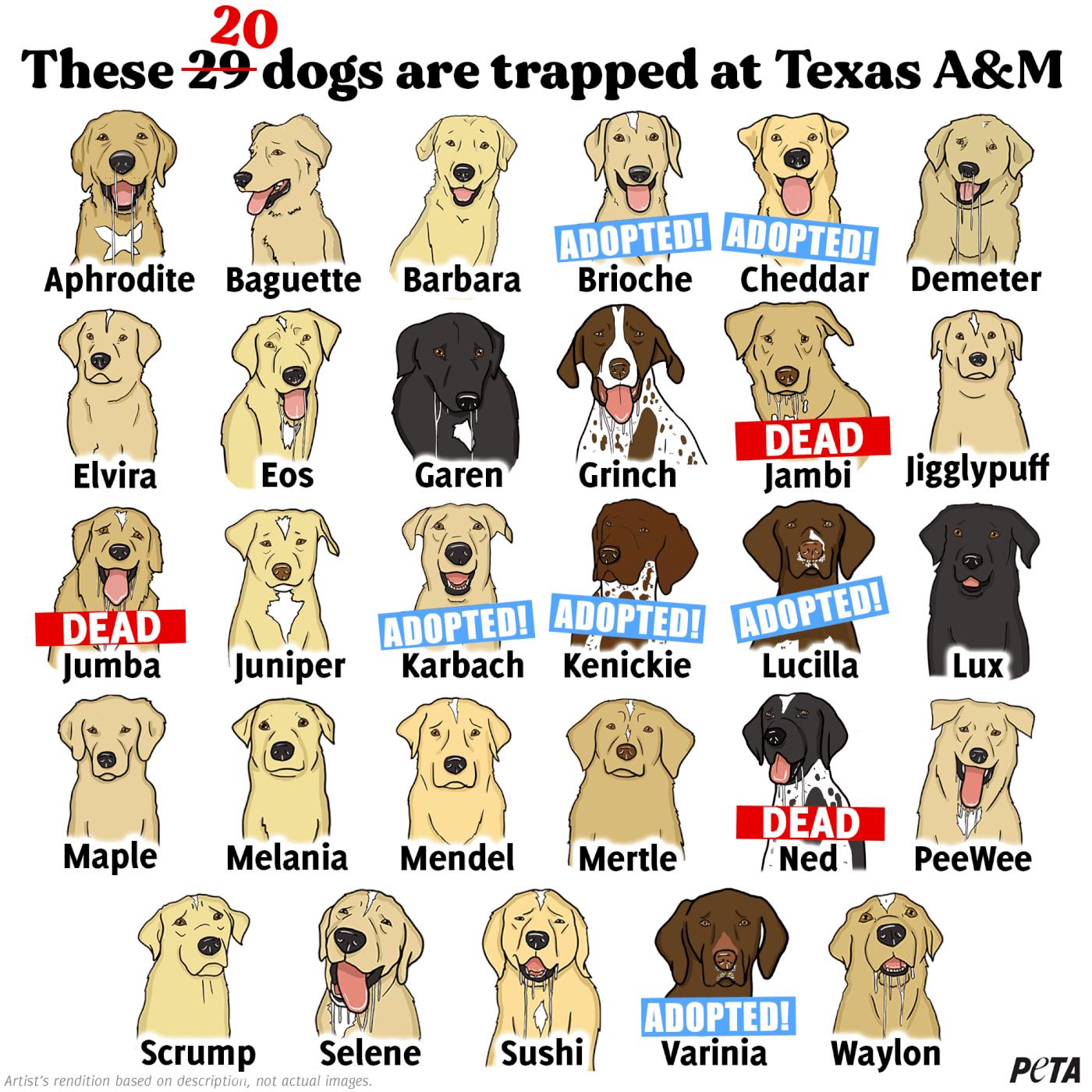 20 Dogs at TAMU