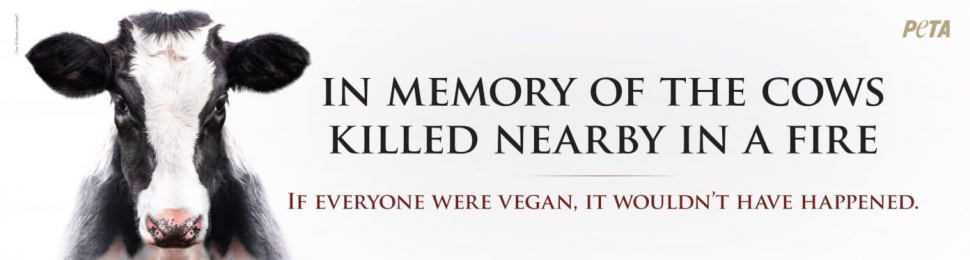 In Memory of the Cows Killed Nearby in a Fire