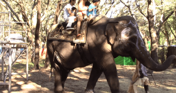 elephant painting and elephant rides are bad for animals