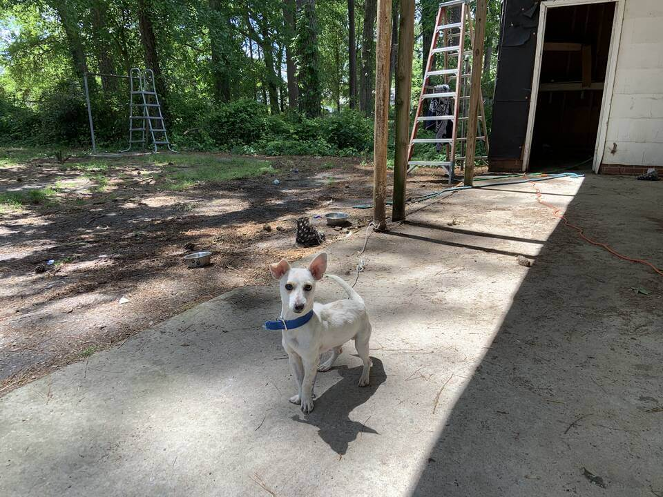 king, Community Animal Project