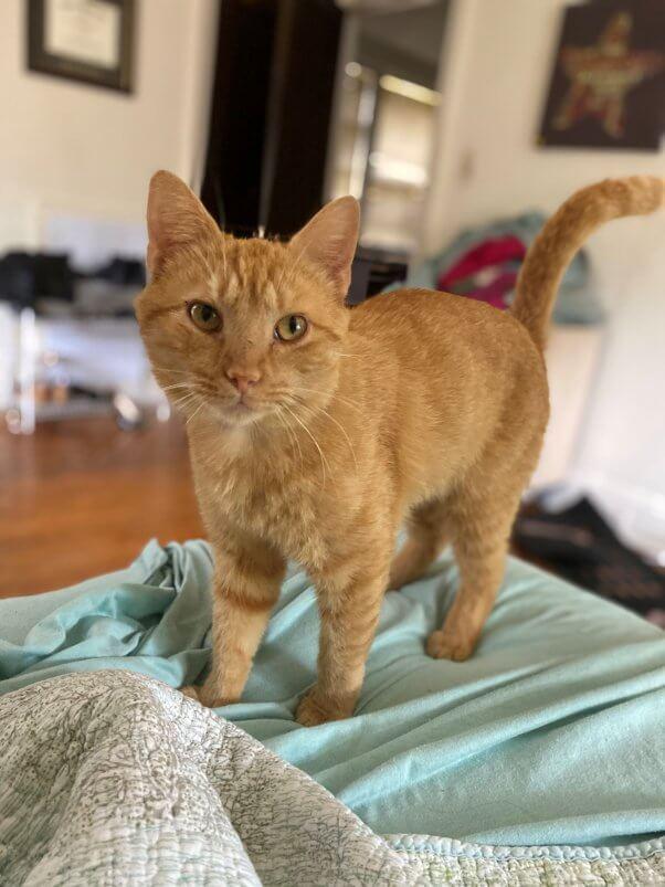 PETA-adoptable-animals-orange-julius