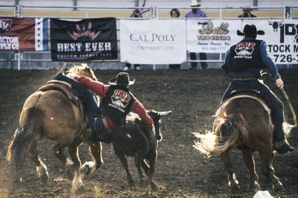 Poly Royal Rodeo human sliding off horse holding onto bull, COVID-19 canceled