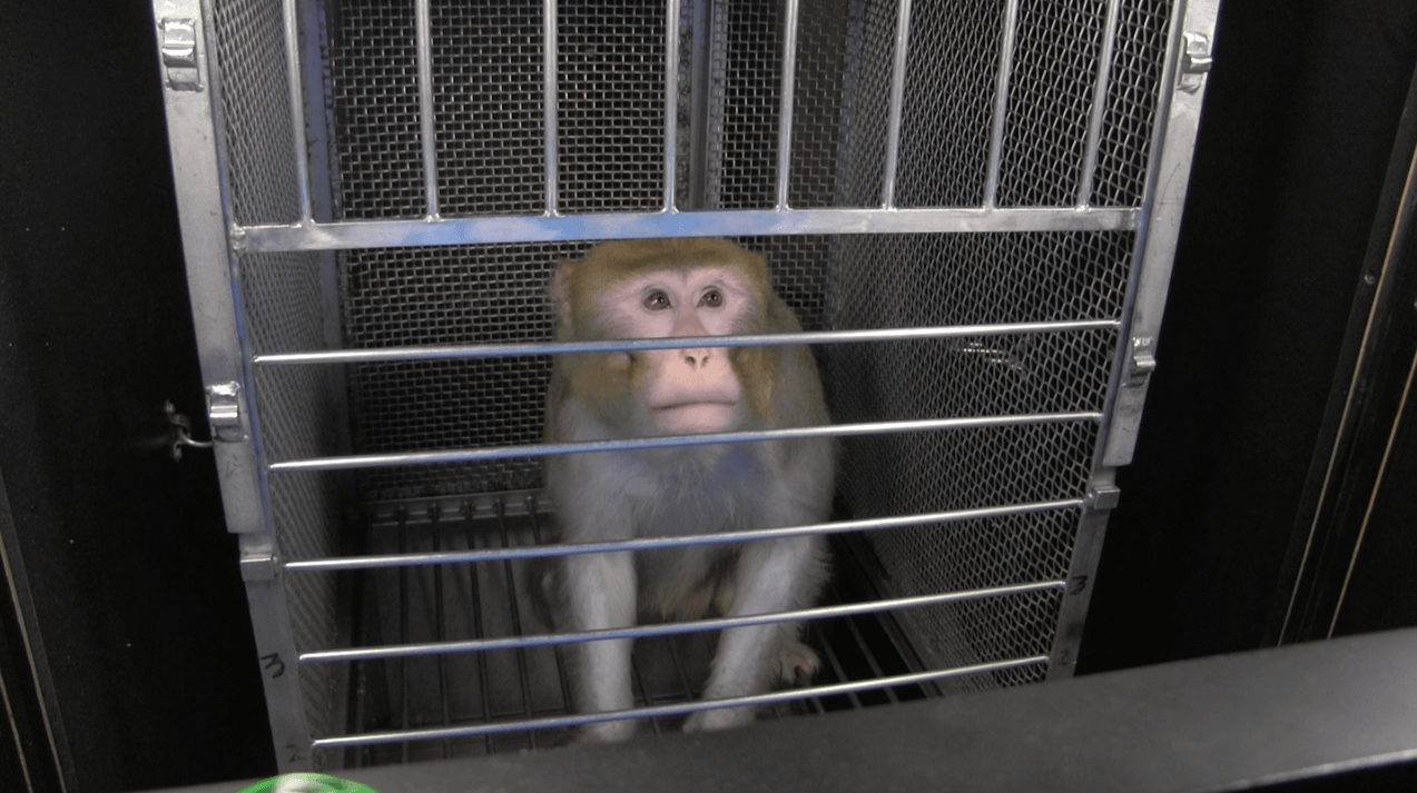 New Documents Reveal: Monkeys' Skulls Cut Open With Your Tax Dollars