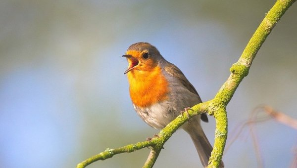 Cruel Traps Reportedly Threaten Songbirds at Zephyrhills Farm Supply Store!