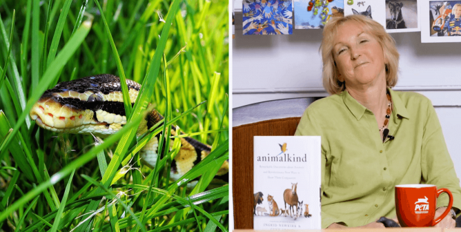 Did You Know Most Snakes Are Shy? Learn More With 'Animalkind'