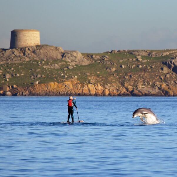 dolphin leaping next to man paddleboarding