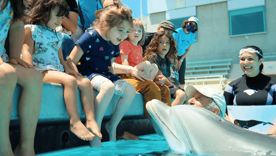 A Robotic Dolphin to Replace Captive Ones? Sign SeaWorld Up