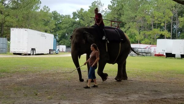 Elephants Forced Into Dangerous Encounters With Humans—Help Now!