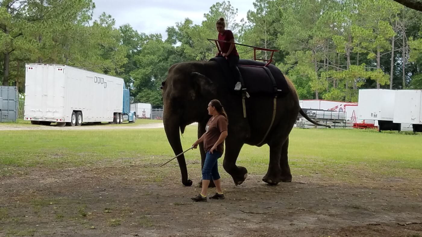 elephant rides at two tails ranch