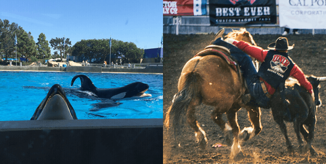 COVID-19 Is Helping People See That Animals Aren't Ours to Use for Entertainment