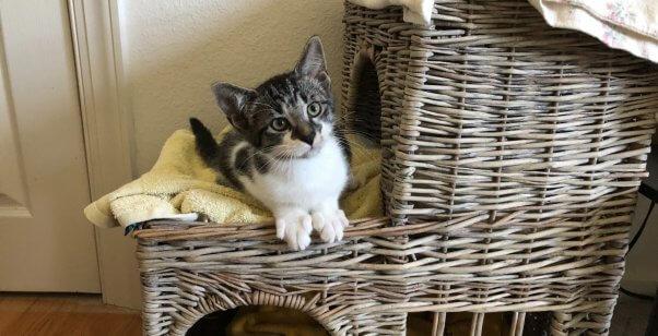 Cute kitten TikTok on wicker house