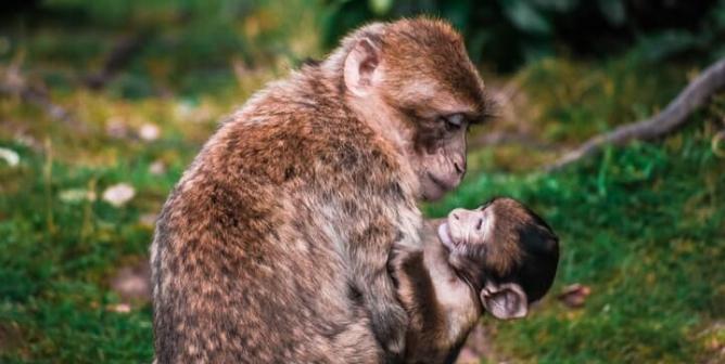 PETA LAMBS Asks NIH's Christian Director to End Nightmare for Monkeys