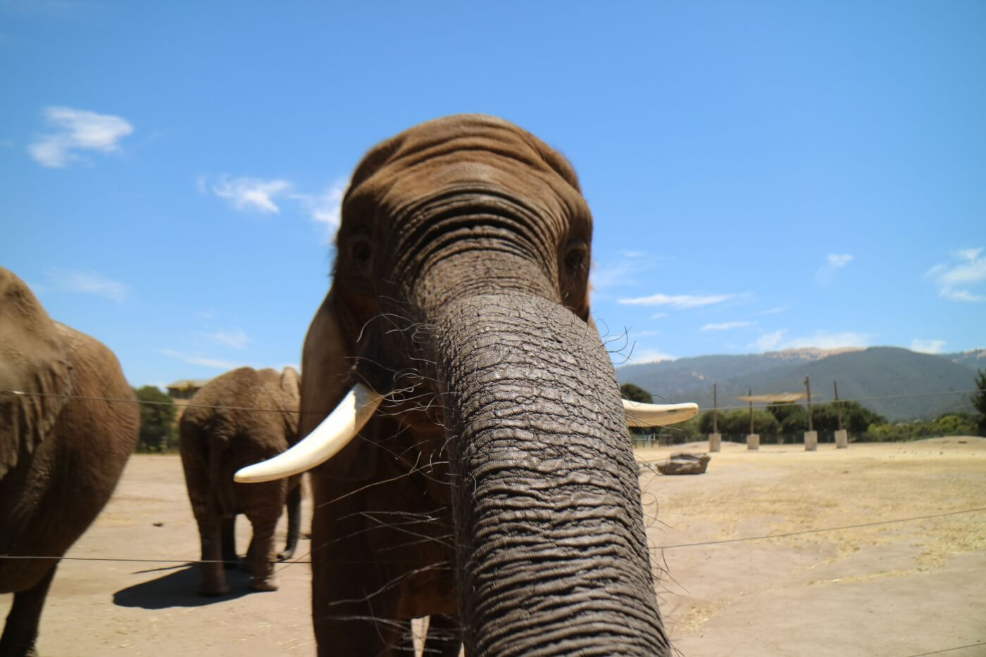 why elephant painting and other encounters are bad for animals