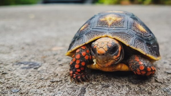 Cats, Turtles, and Hedgehogs Reportedly Facing Death at Defunct Airport!