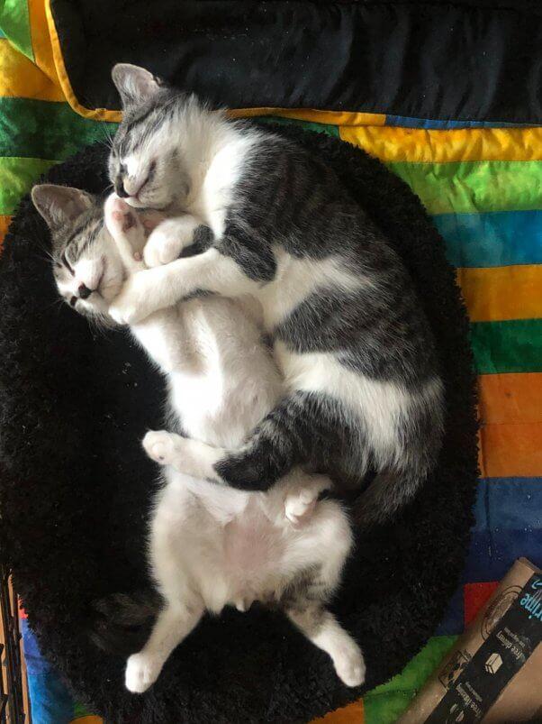 Zoom and TikTok sleeping cuddled up