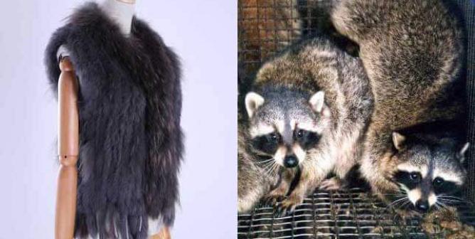 Wish.com Parent Company Under Fire for Ignoring San Francisco Fur Ban