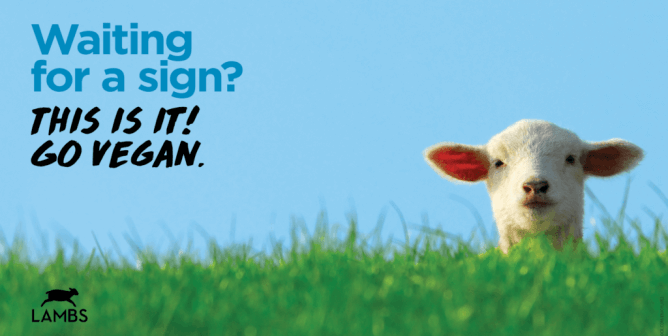Get a Free Zoom Background for Your Church Livestream From PETA LAMBS