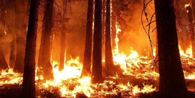 Does California Law Shield Wildfire Arsonists From Cruelty-to-Animals Charges?