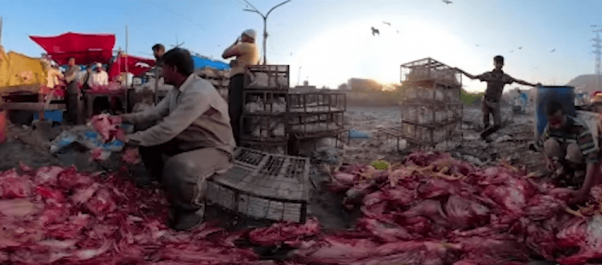 People working in India Live-Animal Market
