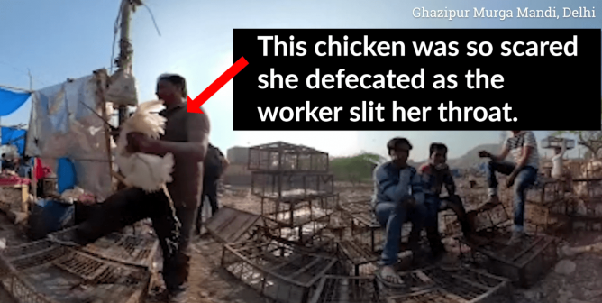 PETA India Exposes Blood-Soaked Live-Animal Markets