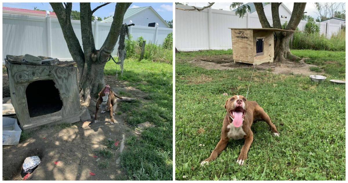 PETA Doghouse Program