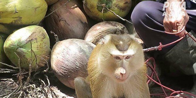 Lotte Plaza Market Exploits Monkeys for Profit—Take Action!