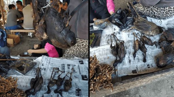 Dead animals in India wet market