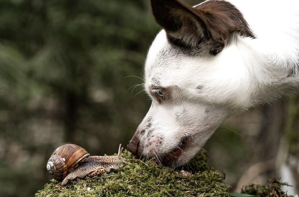 dog meets snail
