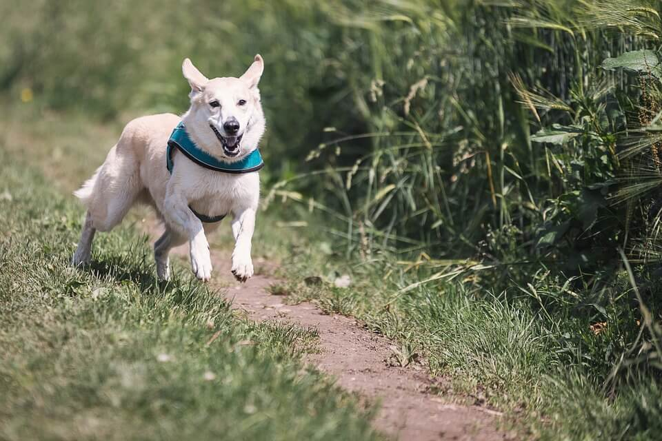 Dogs can detect Covid-19