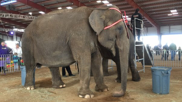 Viola, who's held captive by Carson & Barnes Circus