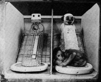Harry Harlow's laboratory of horrors