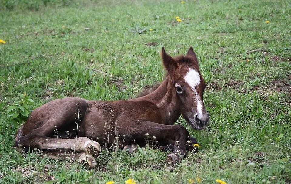 Foal Baby Horse