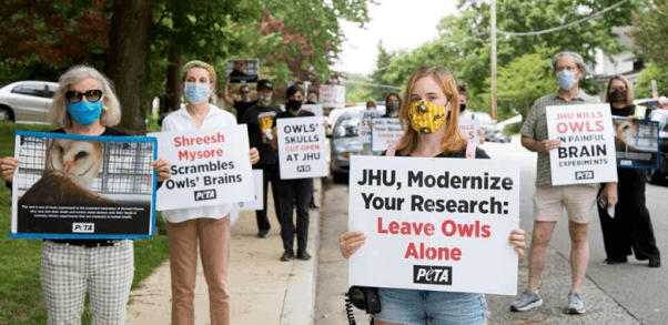 PETA Hoots and Hollers for Owls Trapped at Johns Hopkins University