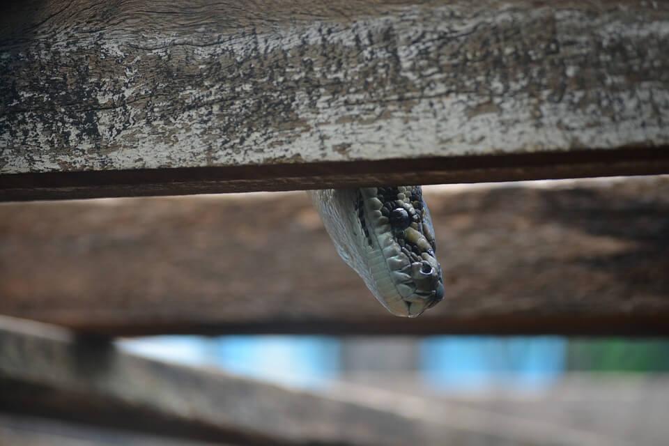 Playful snake