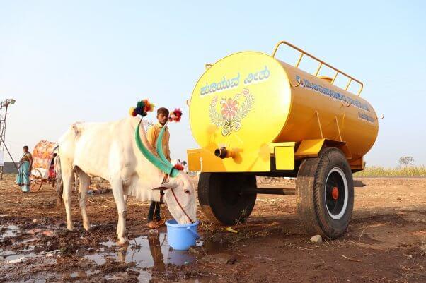 2020 Chinchali Fair - bullock drinks water